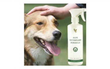 פורמולה וטרינרית (30) Aloe Veterinary Formula